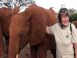 In Nairobi bezoeken de peetouders van weesolifantjes de opvang zelfs twee maal.AVP - image-6123986