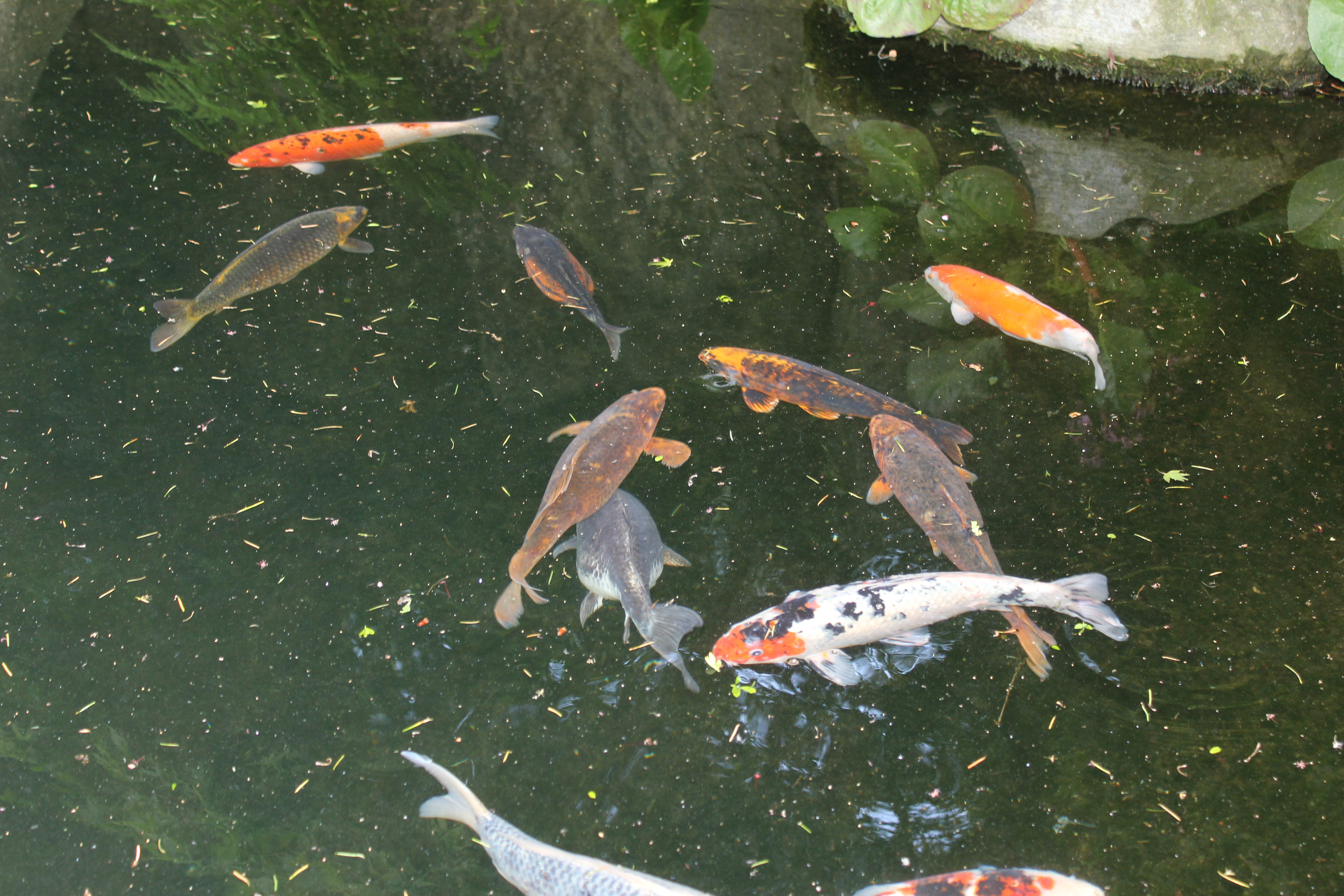 Karpers In Tuin : Vissen in de dierentuin marjo hoedemaker elephant foundation