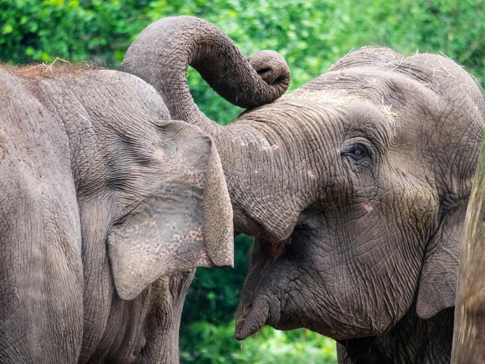 Natuurreis Sri Lanka
