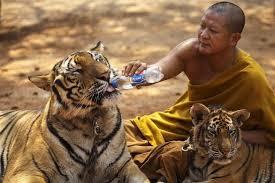 dierenactivisten