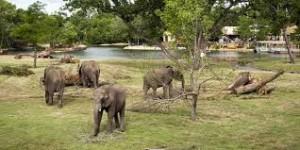 Natuur of cultuur. De Sedgwick County Zoo is een door AZA-geaccrediteerd wildlife park in Wichita, Kansas, de Verenigde Staten van Amerika.